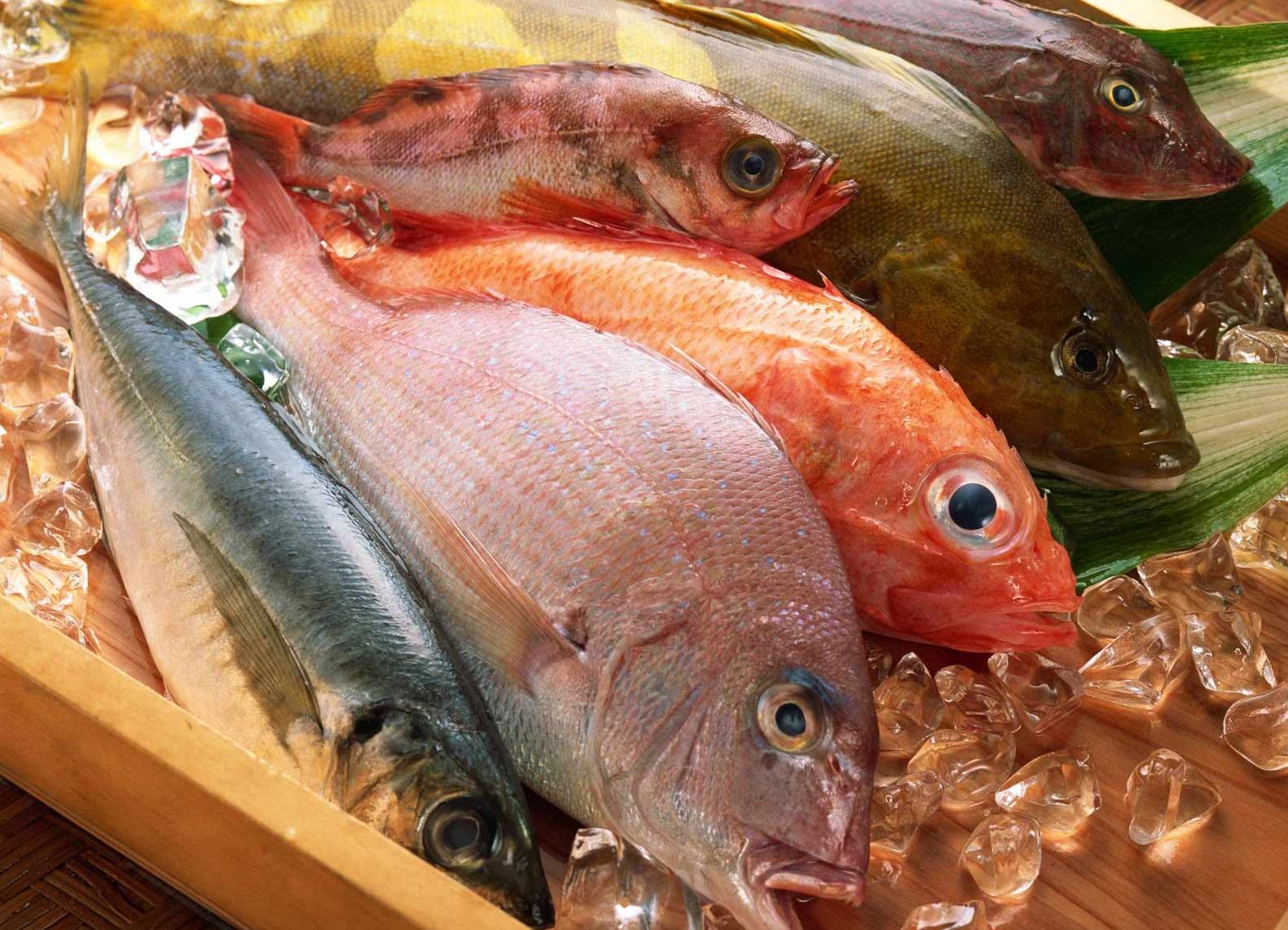 Jual Ikan Laut Marlin Hitam