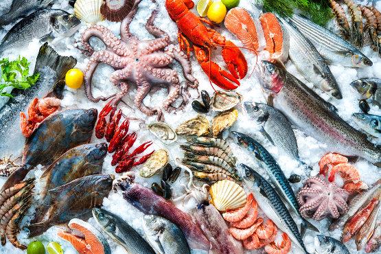 jual ikan laut segar dan beku