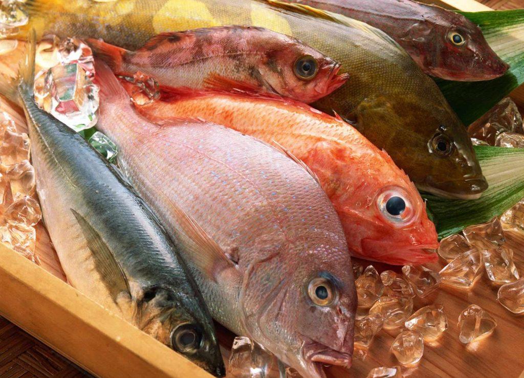 Jual Ikan Laut Marlin Di Jakarta