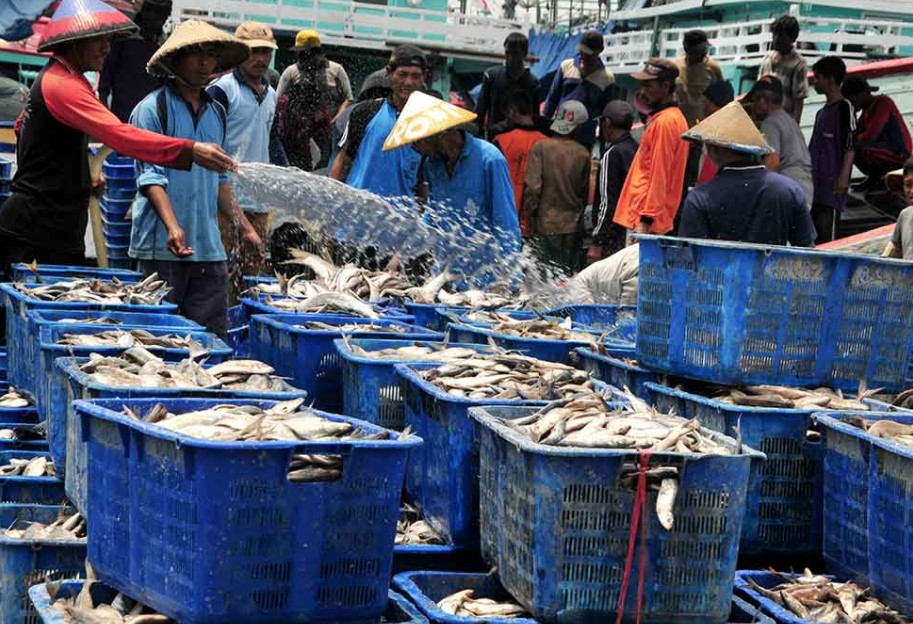 Jual Ikan Laut Cakalang Surabaya