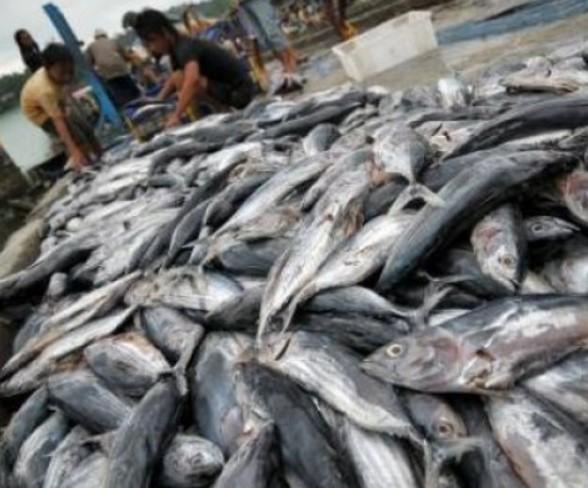 Jual Ikan Dan Udang Laut Frozen Kota Pekanbaru Riau