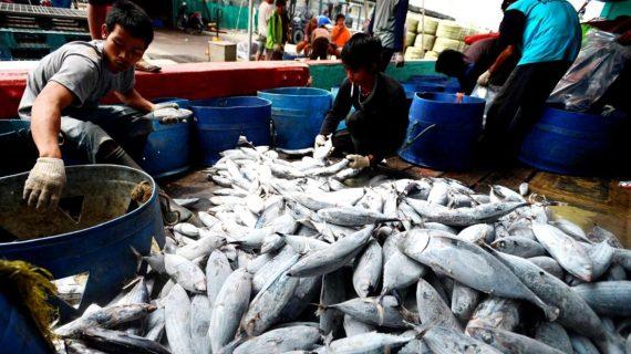 Mana Yang Lebih Sehat? Ikan Laut atau Ikan Tawar?