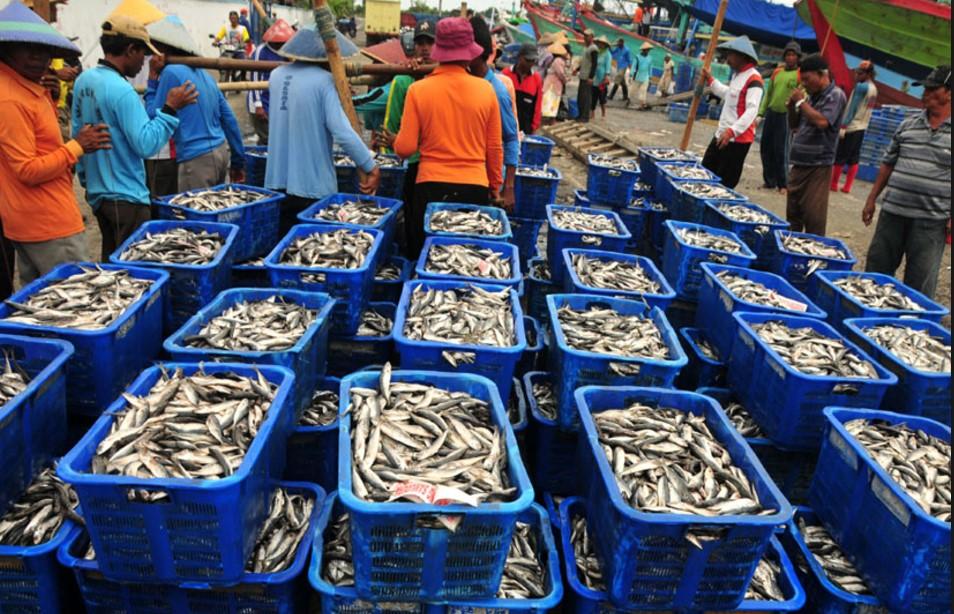 Jual Ikan Laut Tuna Surabaya-